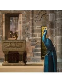Peacock by Geoffrey Dashwood