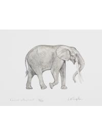 Forest Elephant by Jonathan Kingdon