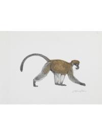 Bale Monkey by Jonathan Kingdon