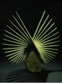 Libration I by Charlotte Mayer