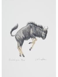 Brindled Gnu by Jonathan Kingdon