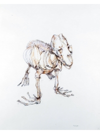 Sea Lion by Bryan Kneale