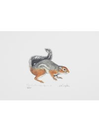 Fire-footed Rope Squirrel by Jonathan Kingdon