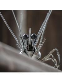 Crayfish by Edouard Martinet