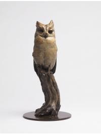 Mauritius Scops Owl by Nick Bibby