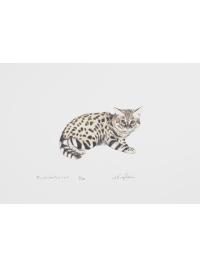 Black - footed Cat by Jonathan Kingdon