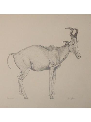 Anatomical Drawing : Lelwel