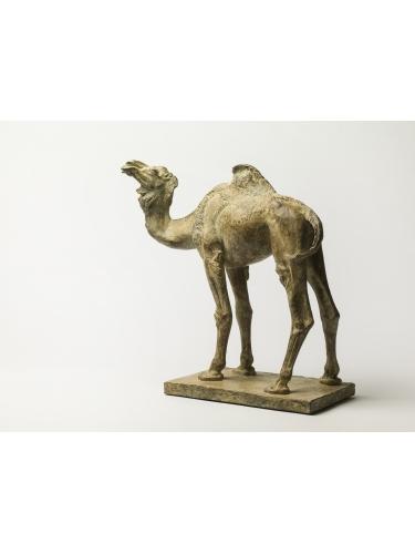 Camel Maquette