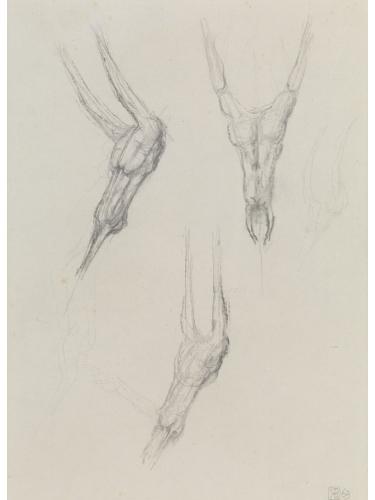 Figure/Head