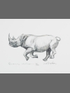 Black Rhinoceros by Jonathan Kingdon