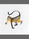 Crowned Monkey by Jonathan Kingdon