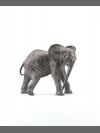 Baby Elephant by Jonathan Kingdon
