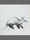 Aardvark by Jonathan Kingdon
